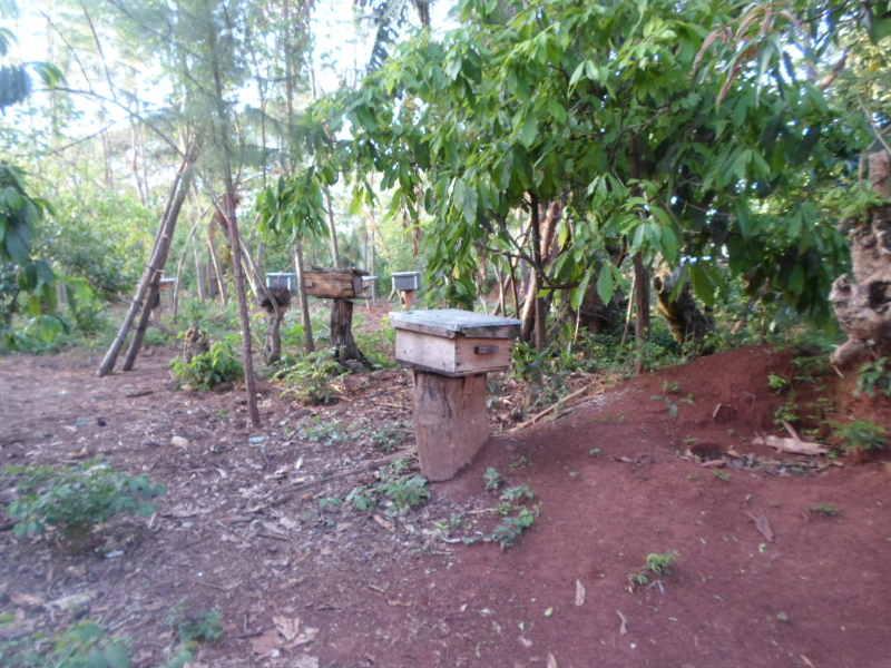 deafnet-beekeeping-project-Uganda1